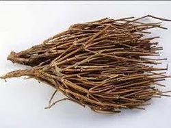 Somlata Extract