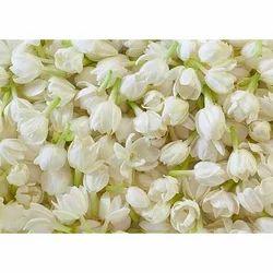 Jasmine Flower Jasminum Sambac Suppliers Traders Manufacturers