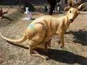 FRP Animal For Garden