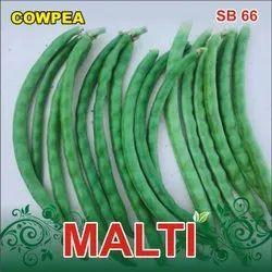 Malti F-1 Hybrid Cowpea Seeds