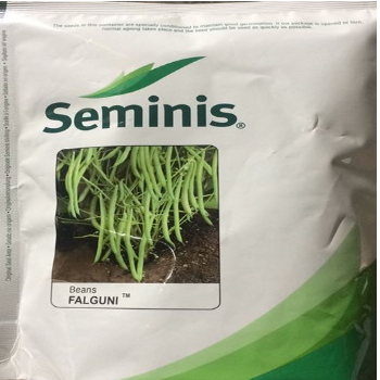 Seminis French Bean Seed Falguni, Pack Size: 500 Gm Pkt
