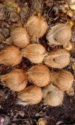 King Size Semi Husked Coconut