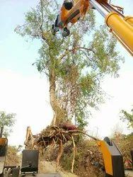 Live Tree transplantation