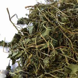 Gotu Kola - Mandukparni - Brahmi Centella Asiatica