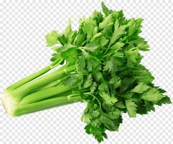 Broccoli A Grade Fresh Celery, Packaging Type: Plastic Bag, Packaging Size: 5 Kg