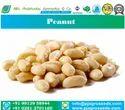 50-60 Bold Peanut, Packaging Type: Vacuum Bag, Packaging Size: 50 Kg Gunny Bags