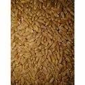 Organic Lokwan Wheat Grain