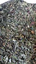 Kalmegh Leaves - Andrographis Paniculata - Chirayta - Kadu Kariyat