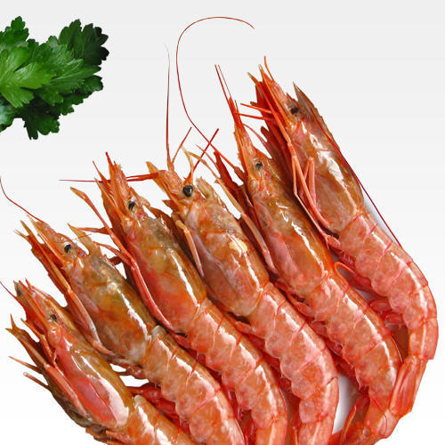 Red Prawn At Rs 1250 Kilogram Jhinga Fish Live Shrimps Prawn