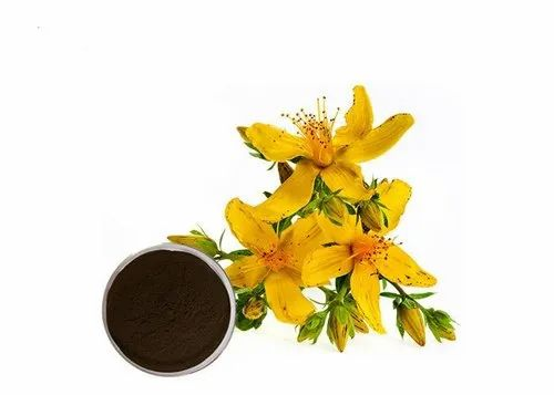 Seed St. John's Wort Extract, Packaging Size: 25 Kg Hdpe Drum, Rs 2350 /kg  | ID: 21990315430