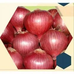 Bombay Red Onion Seeds