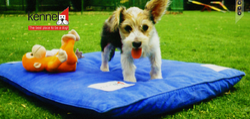 Boxer Pets Training Services