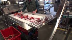Pomegranate Juice Processing Plant