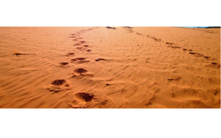 Red And White Sand