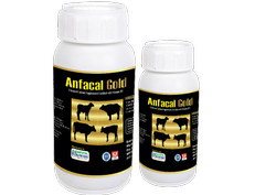 Chelated Calcium Supplement With Vitamin D3 (Anfacal Gold)