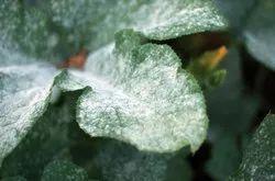 Bio Fungicide Consortium
