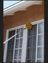 High Rise Spider Web Cleaning Services