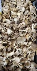 Maharashtra Dried Oyster Mushrooms, Packaging Type: Plastic Bag, Packaging Size: 1 kg