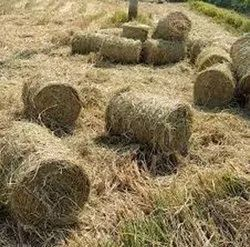 paddy straw Suppliers in india