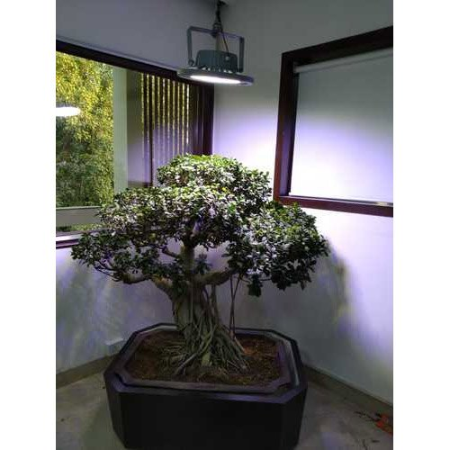 Best Grow Light For Bonsai Tree Bonsai Tree