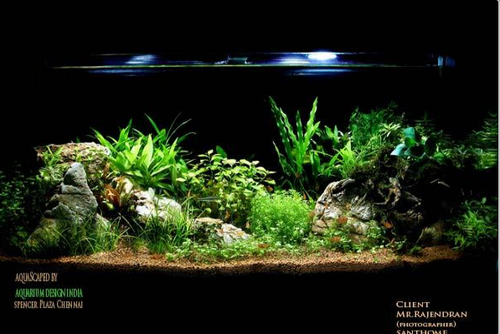 Aquarium Designers In Bangalore 20 Most Attractive