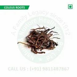 Coleus Roots (Plectranthus scutellarioides, Colforsine, Colforsin, Coleus, Borforsin, Forskolin)