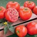 杂交番茄籽