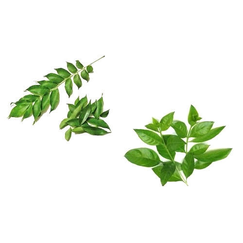 Henna Leaves Packaging Type Loose Rs 150 Kilogram Kvaas