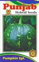 Hybrid Green Pumpkin Seeds