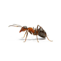 Pre And Post Anti Termite Pest Control Service