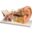 Atico Pvc Giant Ear Model