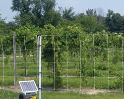 Solar Power Fencing