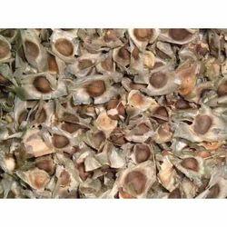 Moringa Plantation Seeds