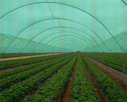 Green Plant Saplings