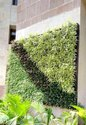 Live Vertical Garden- Square Module