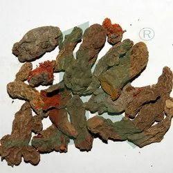 Curcuma Longa / Mother Rhizomes / Turmeric