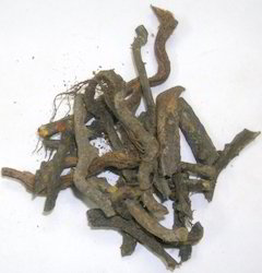 Chitrakmool Extract