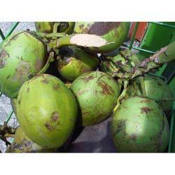Tender Coconut in Delhi, कच्चा नारियल