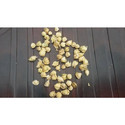 Moringa Oil Seeds