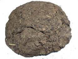 Kesar Zems Cow Dung Cakes Gobar Upla for Hawan and Indian Rituals Dia -5 Pieces