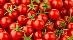 SARASWATI Cherry Tomato