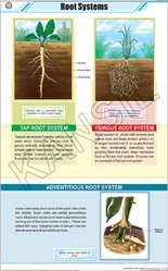 Root Systems  For Botany Chart