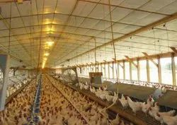 Ec Poultry Shed