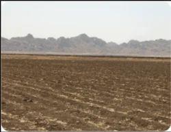 Agricultural Plot For Buy