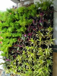 Vertical Landscaping Gardening Services, Coverage Area: 1000 to 3000 Square Feet