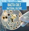 Bioculture Bacteria Solutions