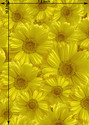 Sunflower Polyster Printed Films