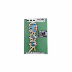 RNA Model On Board