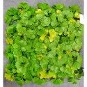 Green Uv Coated Artificial Plastic Vertical Wall Covering Grass Mat