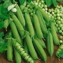 25 Kg Organic Green Peas, Packaging: Jute Bag